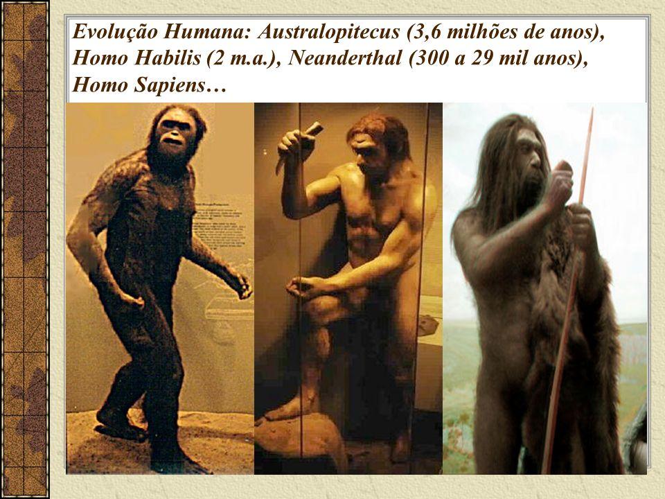 Evolução Humana: Australopitecus (3,6 milhões de anos), Homo Habilis (2 m.a.), Neanderthal (300 a 29 mil anos), Homo Sapiens…