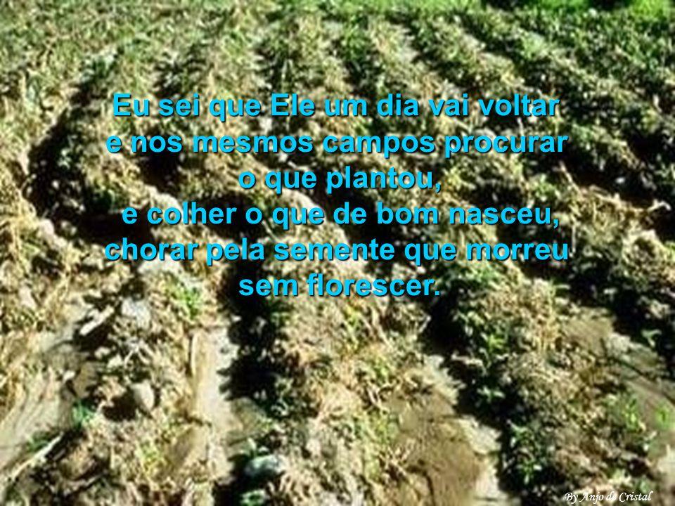 Eu sei que Ele um dia vai voltar e nos mesmos campos procurar o que plantou, e colher o que de bom nasceu, chorar pela semente que morreu sem florescer.