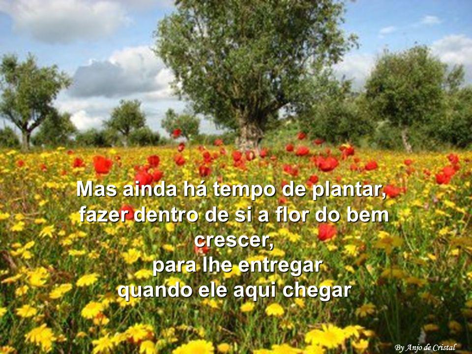 Mas ainda há tempo de plantar, fazer dentro de si a flor do bem crescer, para lhe entregar quando ele aqui chegar
