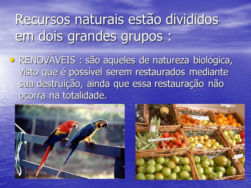 Recursos naturais estão divididos em dois grandes grupos : RENOVÁVEIS : são aqueles de natureza biológica, visto que é possível serem restaurados mediante sua destruição, ainda que essa restauração não ocorra na totalidade.