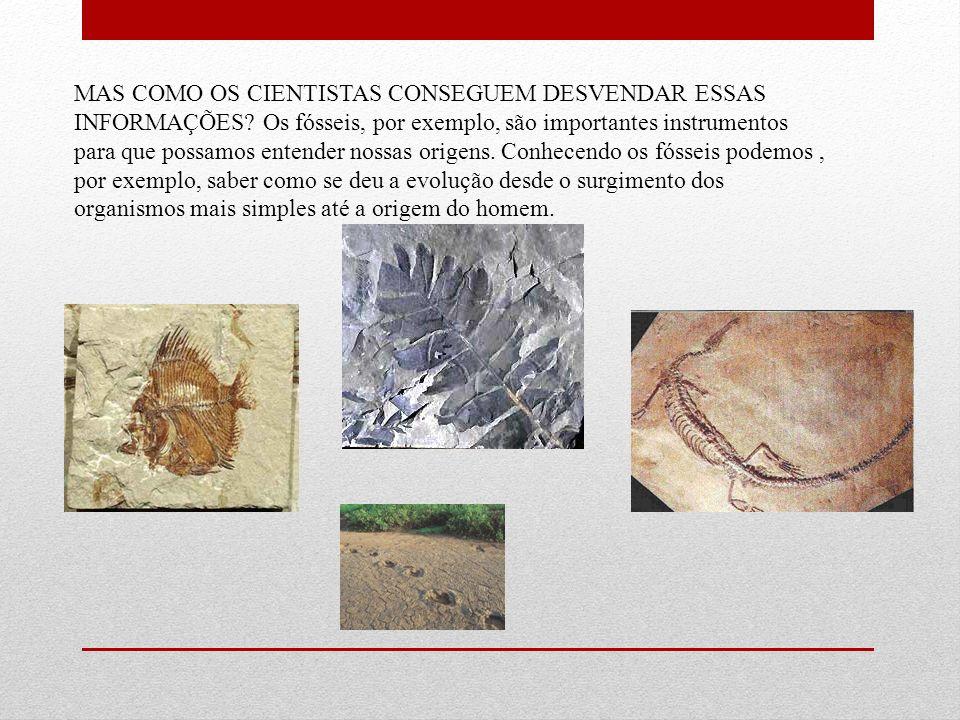 MAS COMO OS CIENTISTAS CONSEGUEM DESVENDAR ESSAS INFORMAÇÕES? Os fósseis, por exemplo, são importantes instrumentos para que possamos entender nossas
