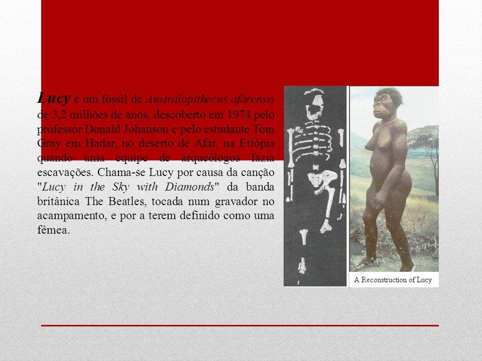 Lucy é um fóssil de Australopithecus afarensis de 3,2 milhões de anos, descoberto em 1974 pelo professor Donald Johanson e pelo estudante Tom Gray em