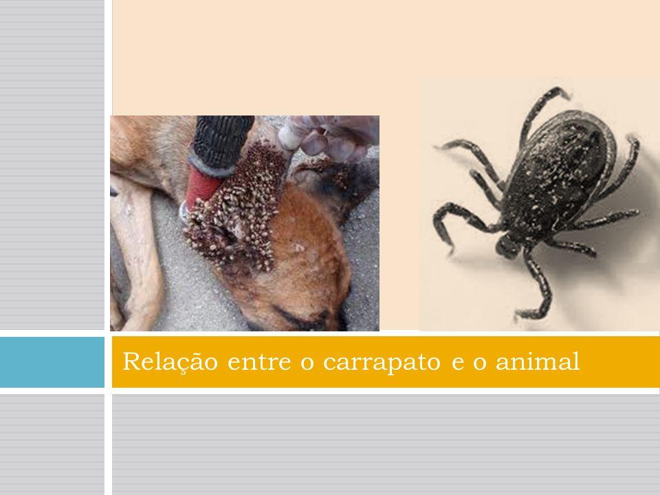 Relação entre o carrapato e o animal Os carrapatos são responsáveis pela transmição de inúmeras doenças. Vivem no chão entre as madeiras em clima húmi