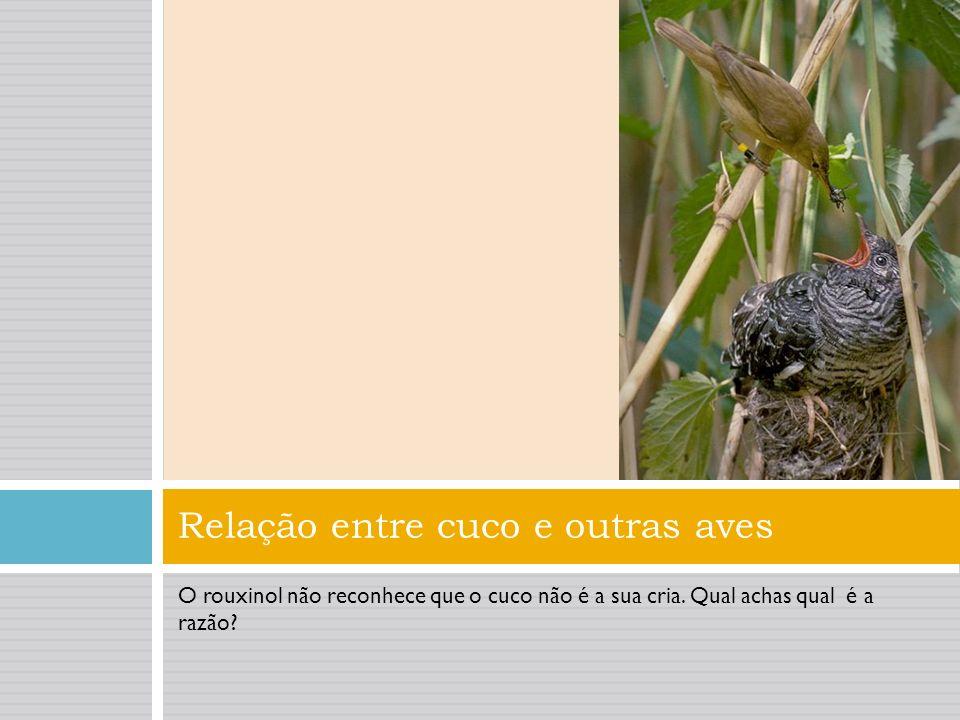 Parasitismo social: cucos Cucos – estas aves não fazem ninhos, mas utilizam o de outras espécies. A fêmea do cuco come o ovo de um ninho de outra espé