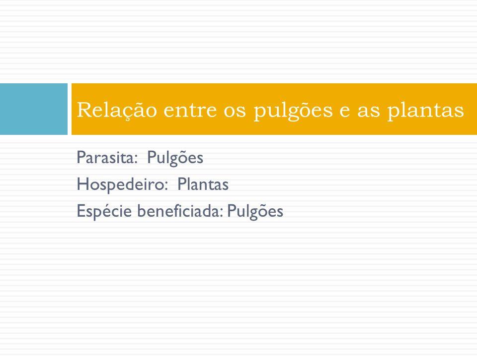 Parasita: Pulgões Hospedeiro: Plantas Espécie beneficiada: Pulgões Relação entre os pulgões e as plantas