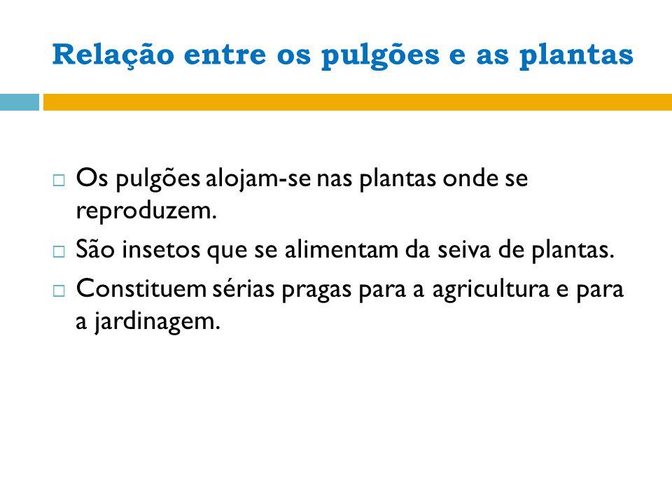 Os pulgões alojam-se nas plantas onde se reproduzem.