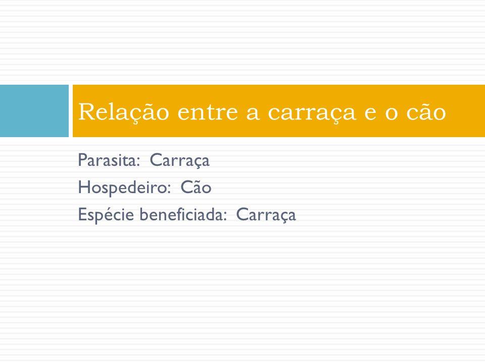 Parasita: Carraça Hospedeiro: Cão Espécie beneficiada: Carraça Relação entre a carraça e o cão