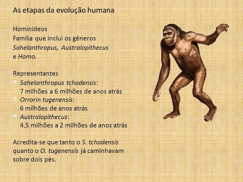As etapas da evolução humana Hominídeos Família que inclui os gêneros Sahelanthropus, Australopithecus e Homo. Representantes Sahelanthropus tchadensi