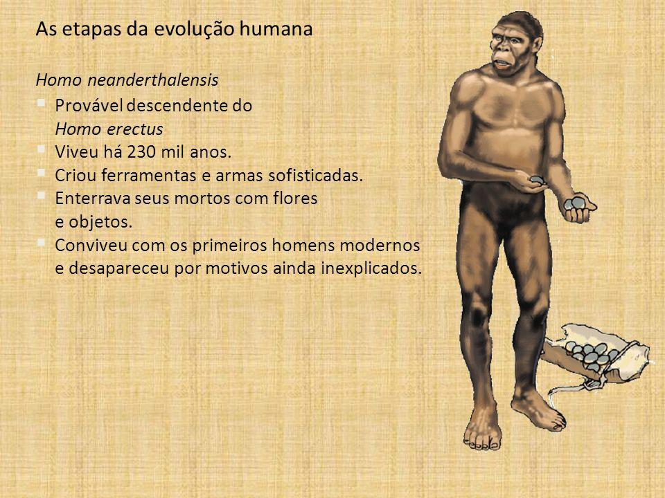 As etapas da evolução humana Homo neanderthalensis Provável descendente do Homo erectus Viveu há 230 mil anos. Criou ferramentas e armas sofisticadas.