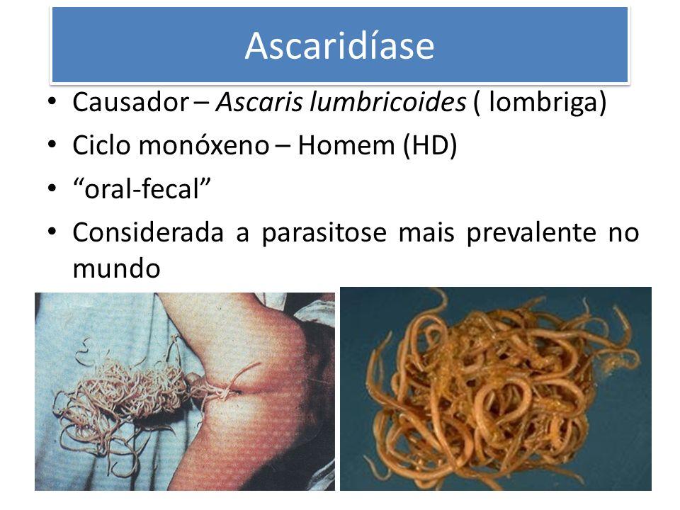Ascaridíase Causador – Ascaris lumbricoides ( lombriga) Ciclo monóxeno – Homem (HD) oral-fecal Considerada a parasitose mais prevalente no mundo