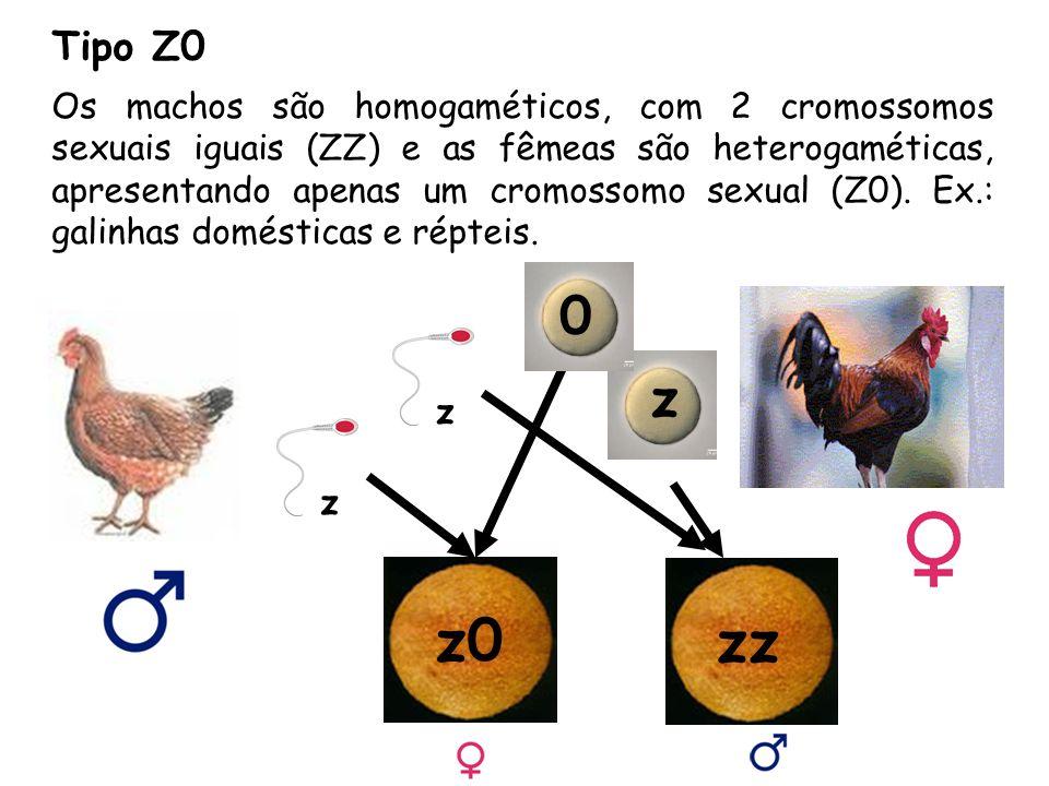 Tipo Z0 Os machos são homogaméticos, com 2 cromossomos sexuais iguais (ZZ) e as fêmeas são heterogaméticas, apresentando apenas um cromossomo sexual (Z0).