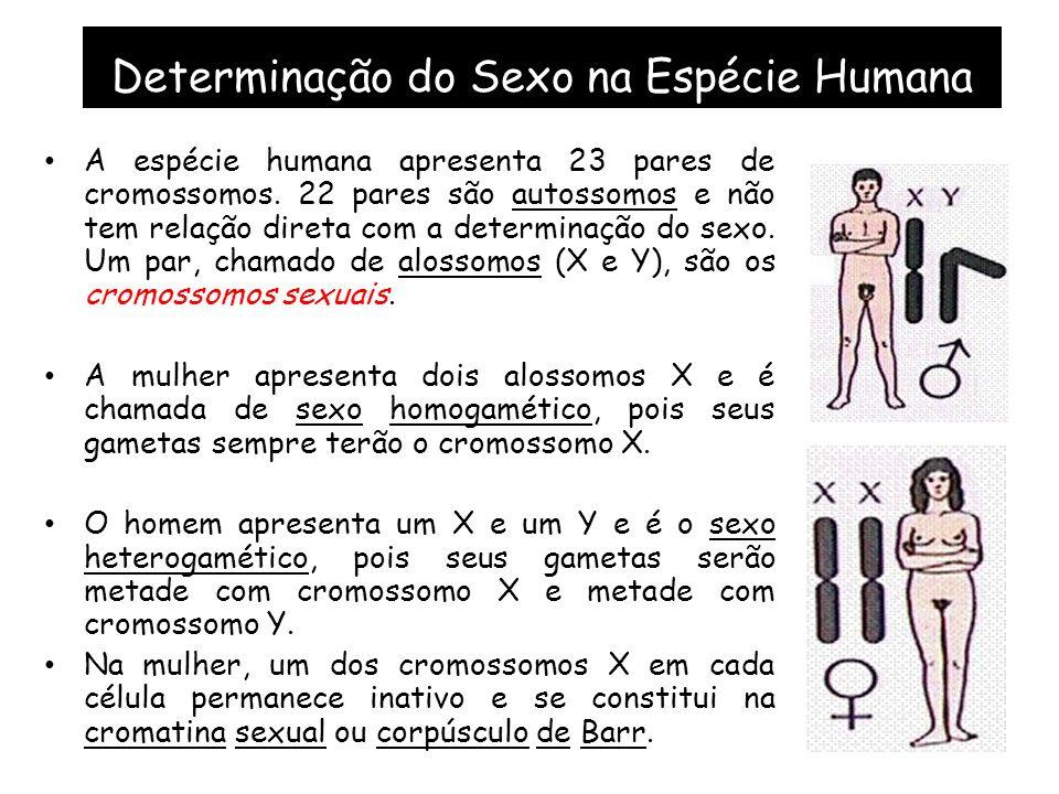 Determinação do Sexo na Espécie Humana A espécie humana apresenta 23 pares de cromossomos.
