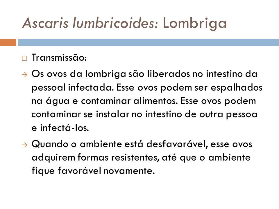Ascaris lumbricoides: Lombriga Transmissão: Os ovos da lombriga são liberados no intestino da pessoal infectada. Esse ovos podem ser espalhados na águ