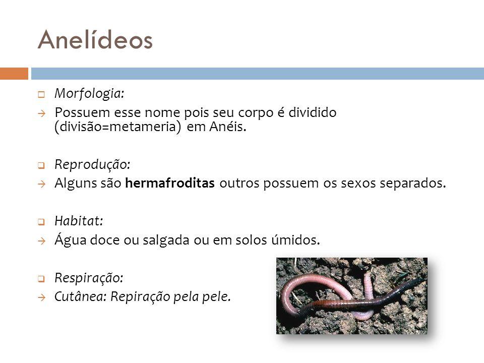 Anelídeos Morfologia: Possuem esse nome pois seu corpo é dividido (divisão=metameria) em Anéis. Reprodução: Alguns são hermafroditas outros possuem os