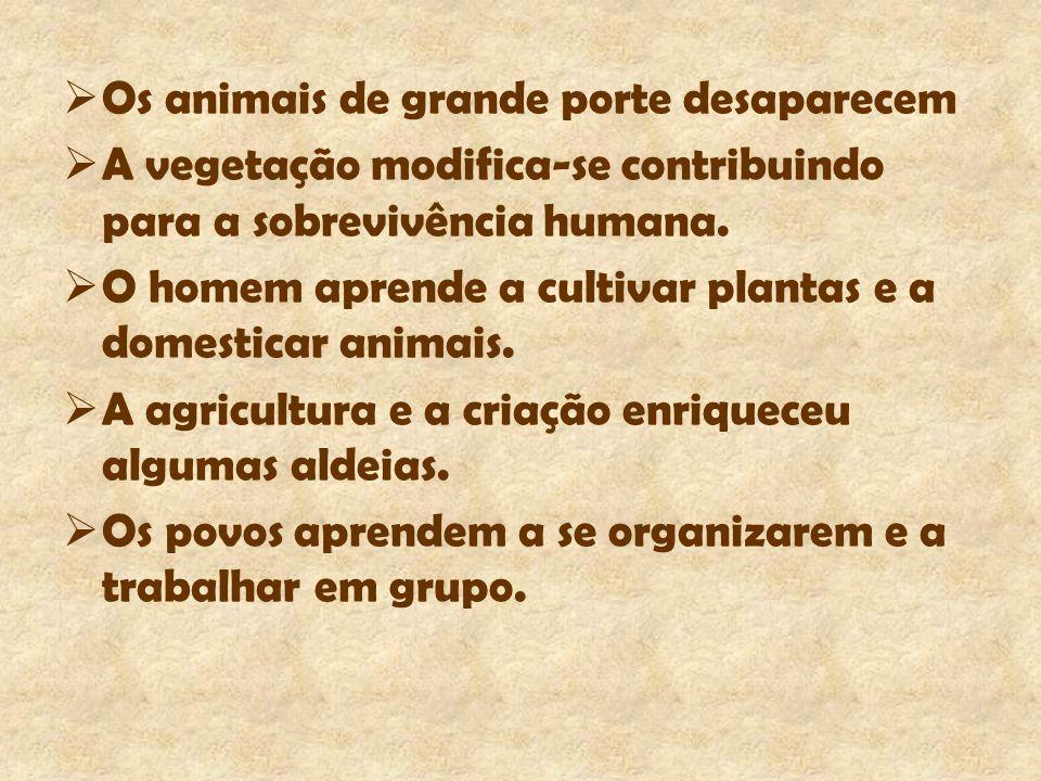 Os animais de grande porte desaparecem A vegetação modifica-se contribuindo para a sobrevivência humana. O homem aprende a cultivar plantas e a domest