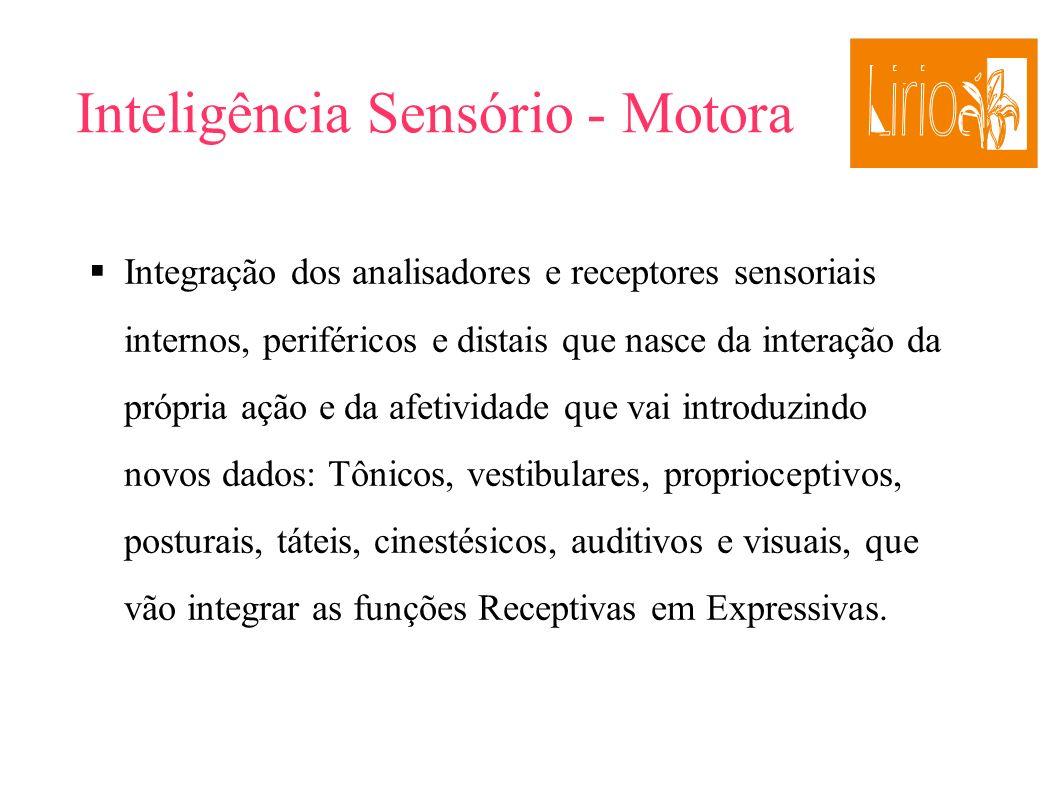 Inteligência Sensório - Motora Integração dos analisadores e receptores sensoriais internos, periféricos e distais que nasce da interação da própria a