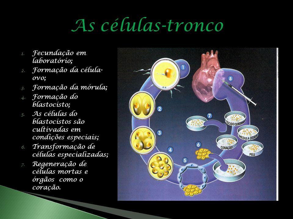 1.Fecundação em laboratório; 2. Formação da célula- ovo; 3.