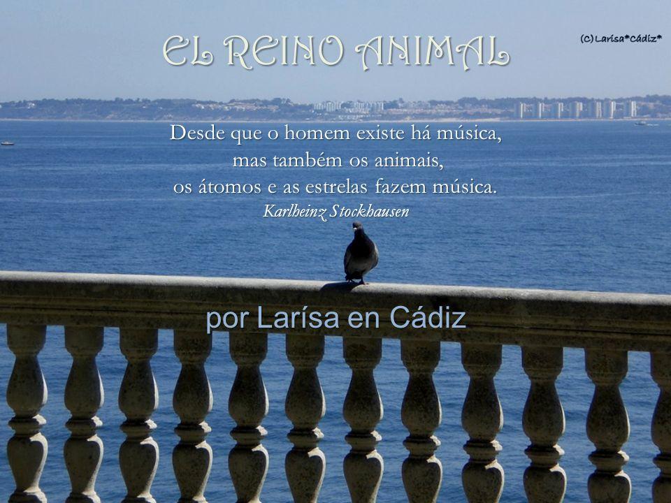 por Larísa en Cádiz Desde que o homem existe há música, mas também os animais, mas também os animais, os átomos e as estrelas fazem música.