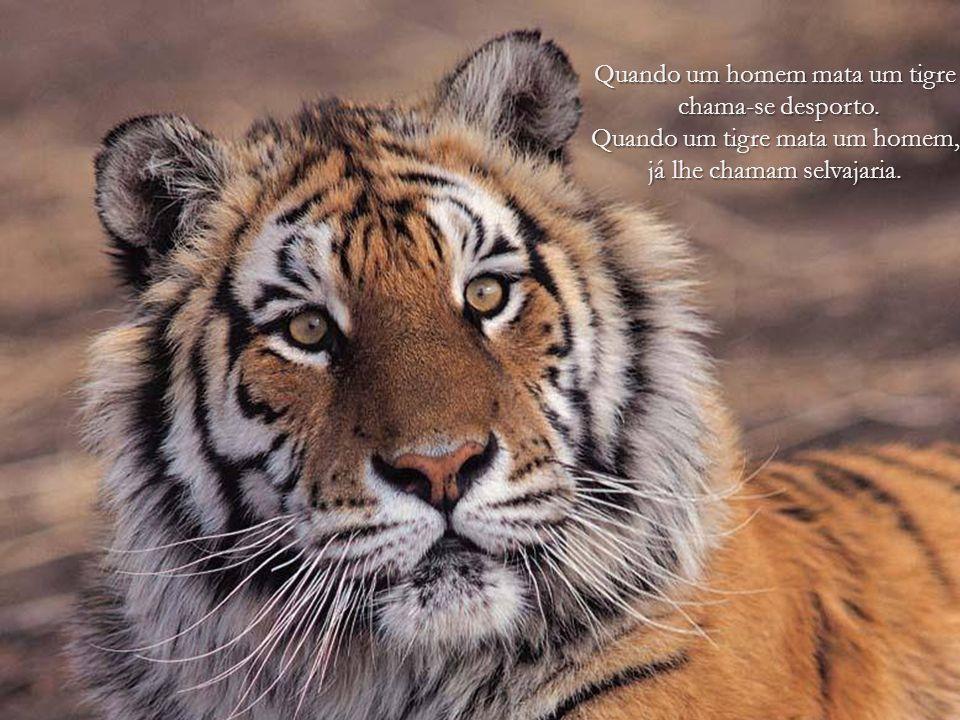 O homem tem feito da Terra um inferno para os animais. Arthur Schopenhauer
