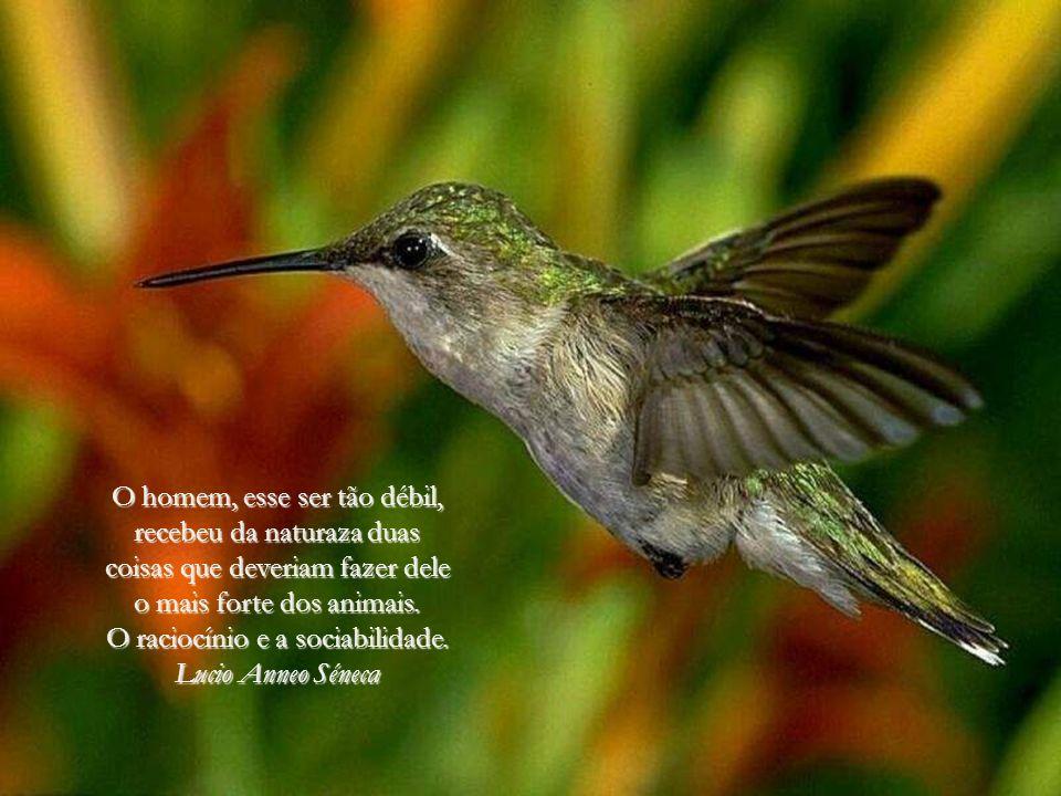De todos os animais da criação, o homem é o único que bebe sem ter sede, come sem ter fome e fala sem ter nada que dizer. John Steinbeck