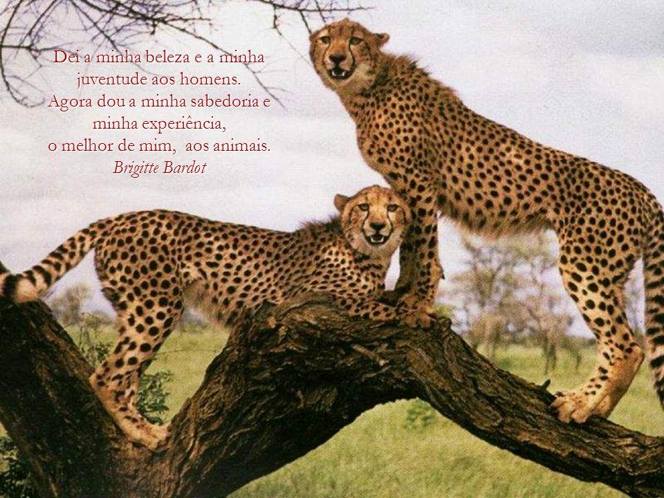 Um país, uma civilização, pode ser julgada pela forma como trata os seus animais. Mahatma Gandhi Mahatma Gandhi