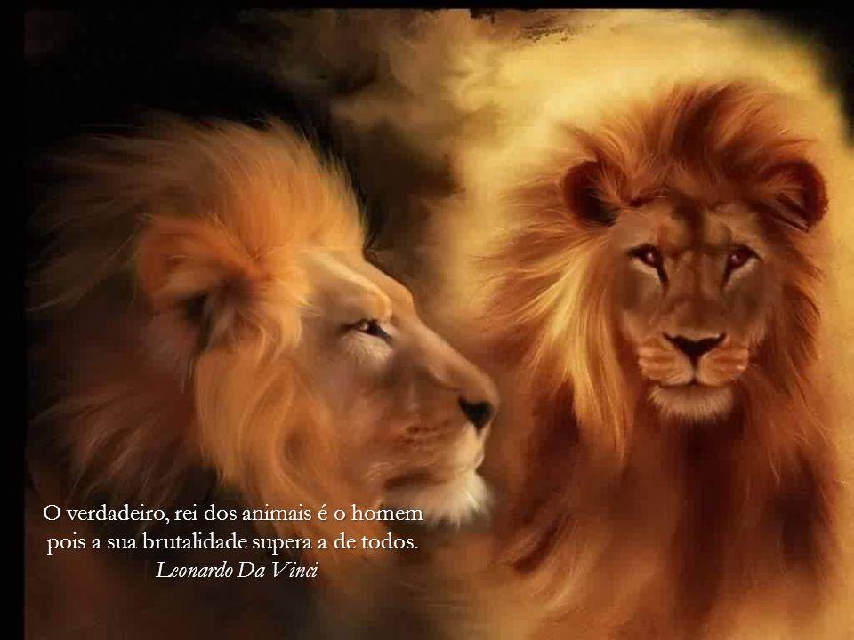 Duas coisas me surpreendem, a inteligência dos animais e a bestialidade dos homens.