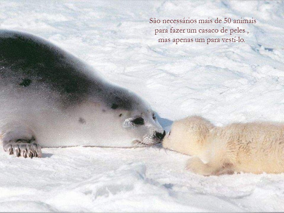 Às vezes preguntam-me porque invisto tanto tempo e dinheiro falando de amabilidade para com os animais quando existe tanta crueldade entre os homens.