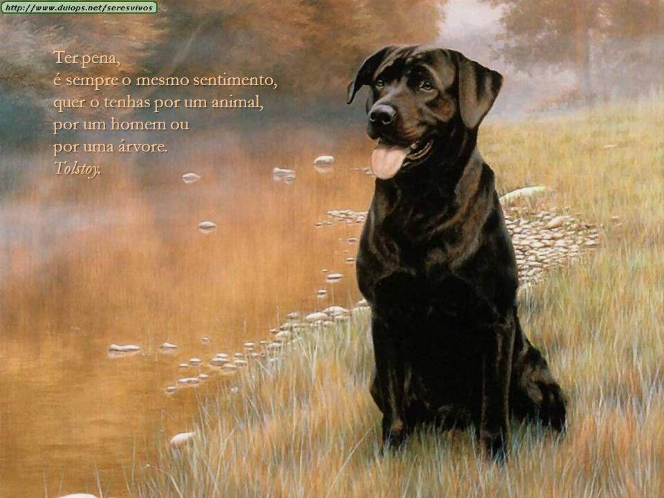 Ter pena, é sempre o mesmo sentimento, quer o tenhas por um animal, por um homem ou por uma árvore.