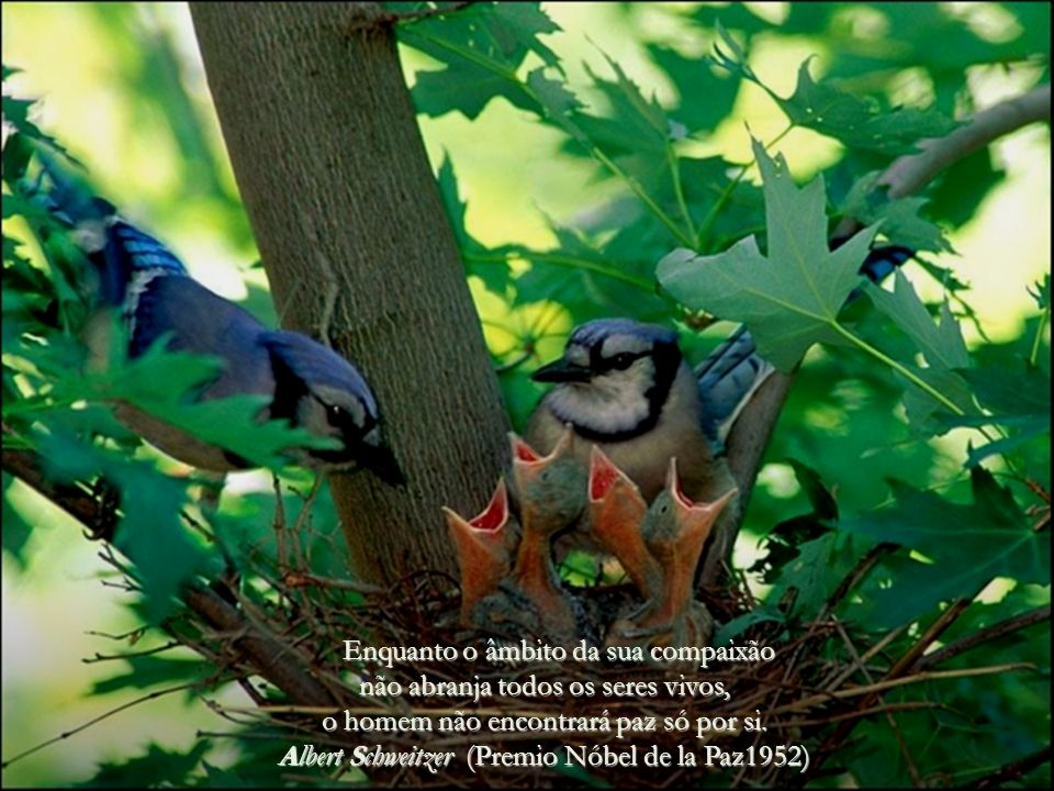 Ter pena, é sempre o mesmo sentimento, quer o tenhas por um animal, por um homem ou por uma árvore. Tolstoy.