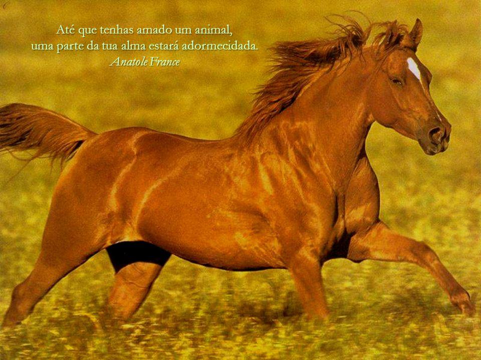 Até que tenhas amado um animal, uma parte da tua alma estará adormecidada. Anatole France