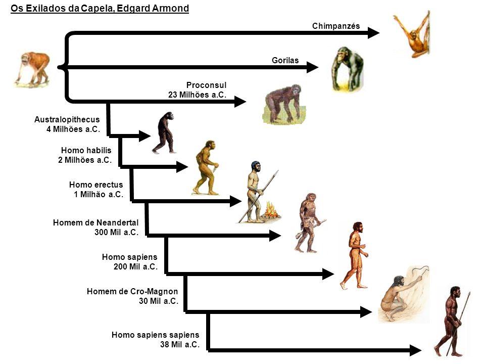 Chimpanzés Gorilas Proconsul 23 Milhões a.C. Australopithecus 4 Milhões a.C. Homo habilis 2 Milhões a.C. Homo erectus 1 Milhão a.C. Homem de Neanderta