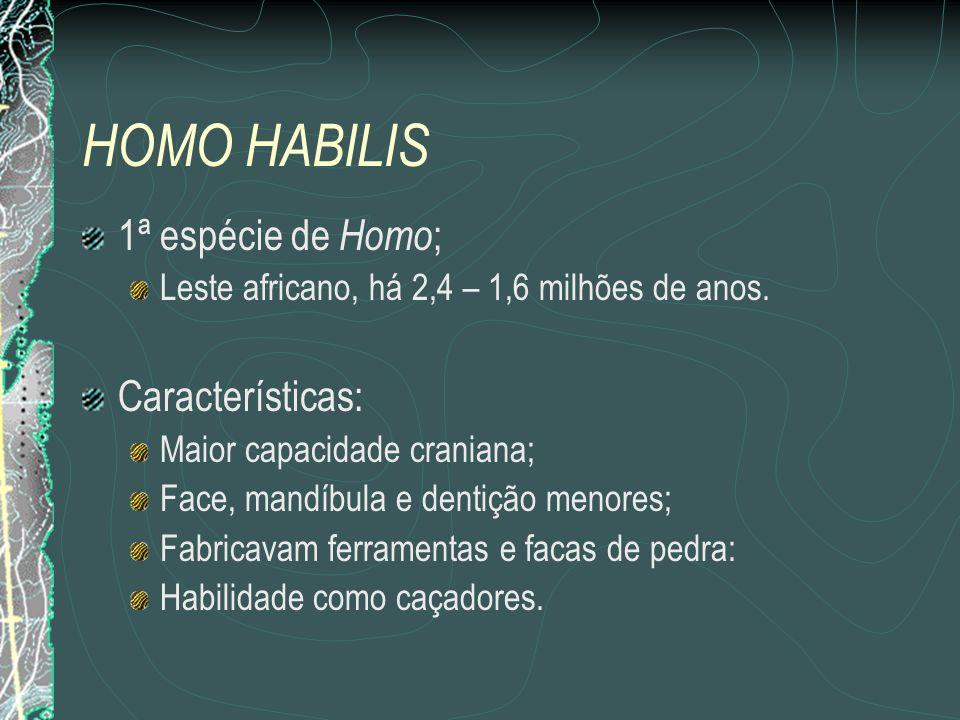 HOMO HABILIS 1ª espécie de Homo ; Leste africano, há 2,4 – 1,6 milhões de anos.