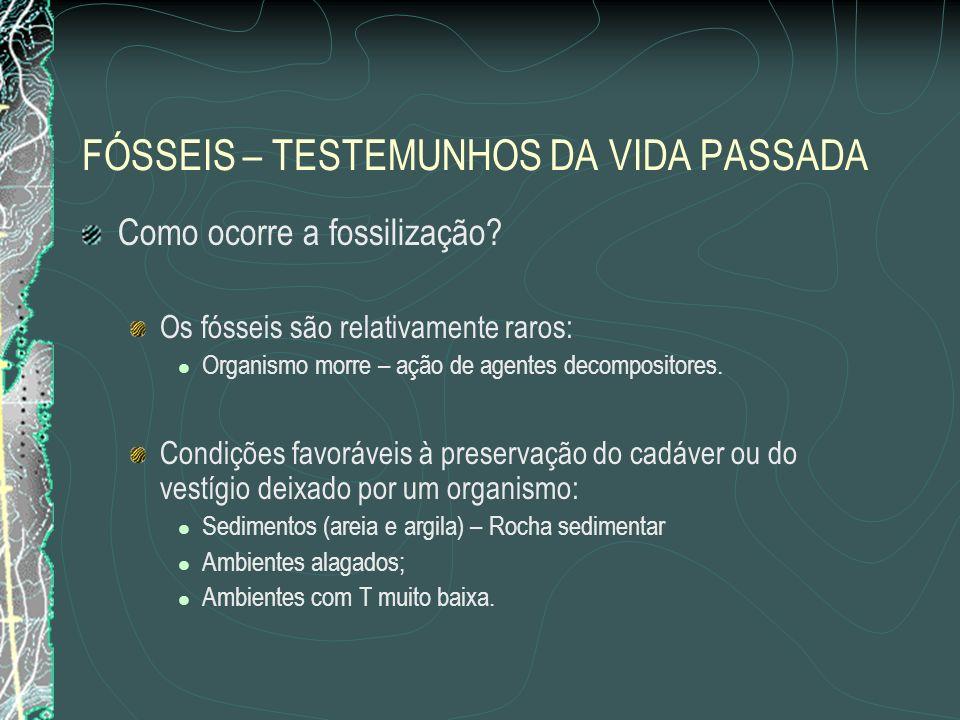 FÓSSEIS – TESTEMUNHOS DA VIDA PASSADA Como ocorre a fossilização.