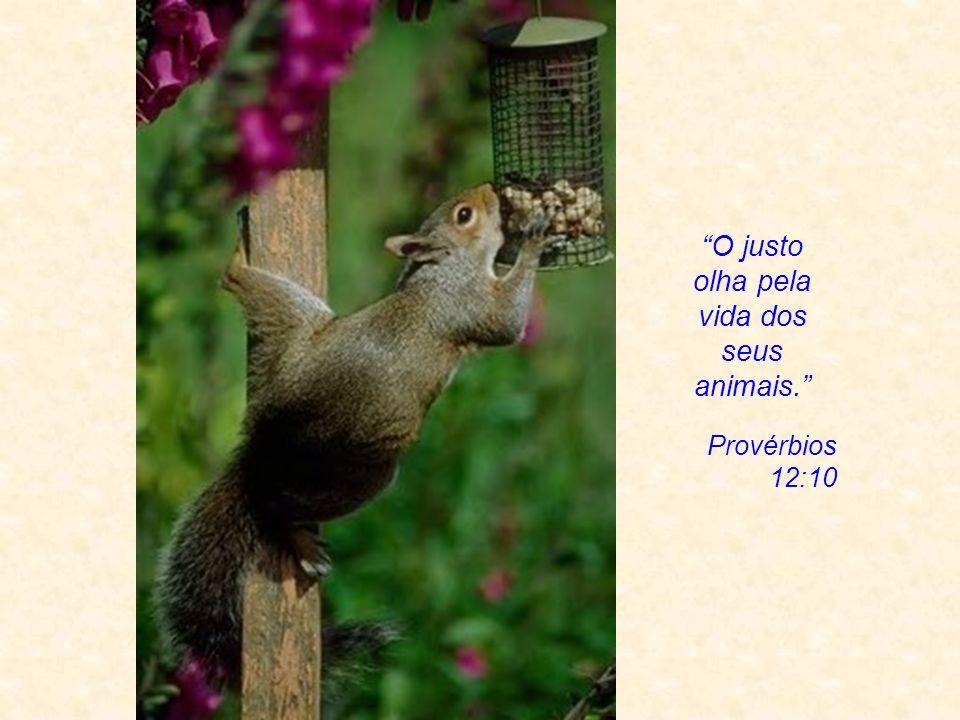 Jean-Jacques Rousseau Os animais que você come não são aqueles que devoram outros, você não come as bestas carnívoras, você as toma como padrão. Você