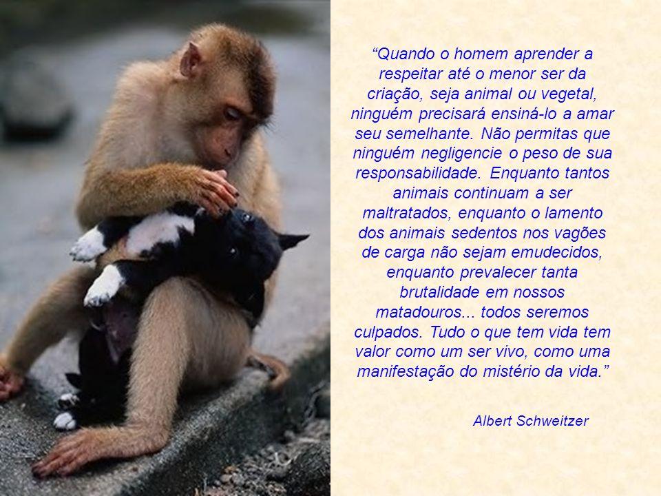 O justo olha pela vida dos seus animais. Provérbios 12:10