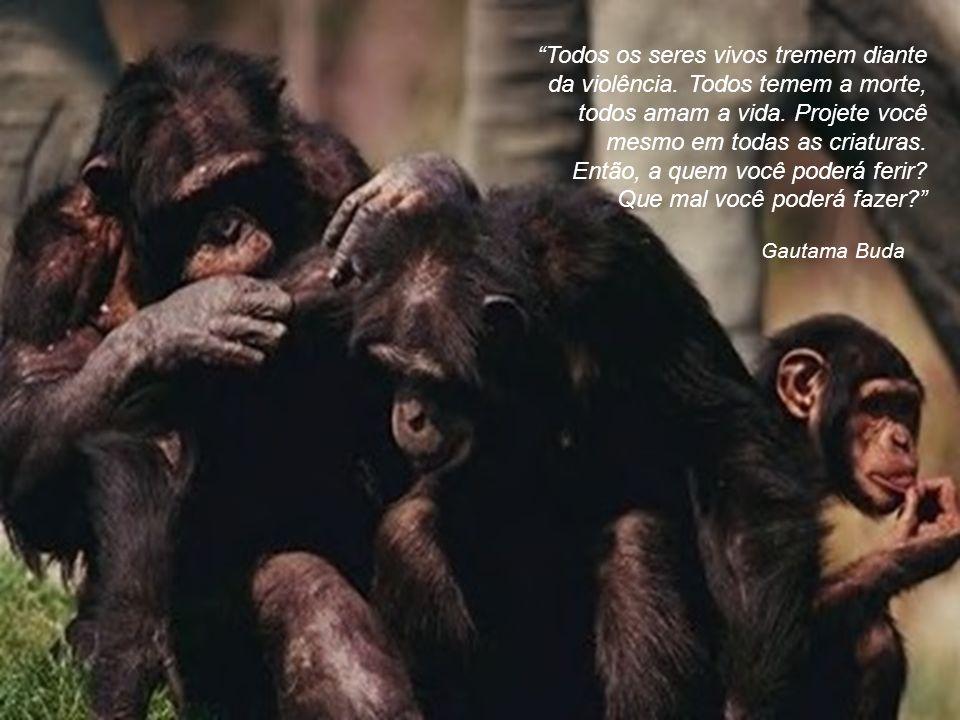 George B. Shaw Isto é terrível! Não apenas o sofrimento e a morte dos animais, mas o fato de o homem reprimir em si mesmo, desnecessariamente, a mais