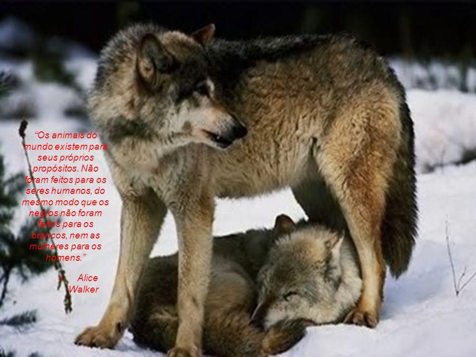 Dr. Louis J. Camuti Não creia que os animais sofrem menos do que os seres humanos. A dor é a mesma para eles e para nós. Talvez pior, pois eles não po