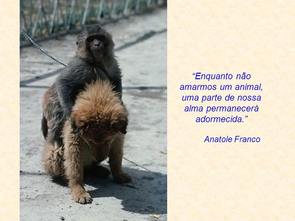Seja você também a luz dos animais...Gandhi Você precisa ser a mudança que você quer ver no mundo.