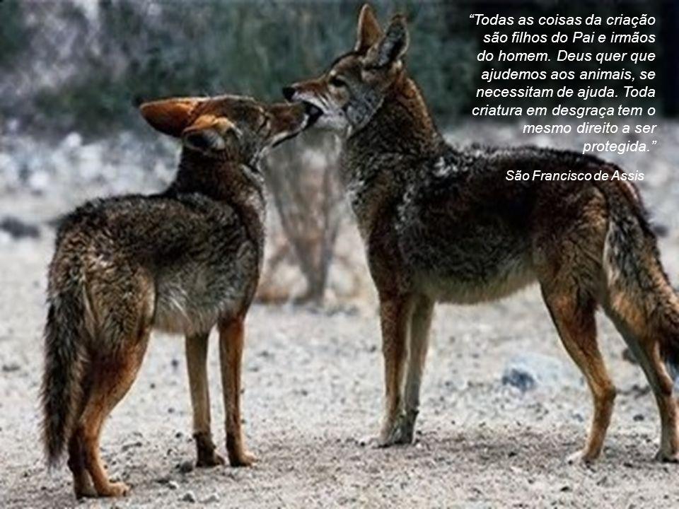 Mahavamsa Todos os seres vivos buscam a felicidade; direcione sua compaixão para todos.