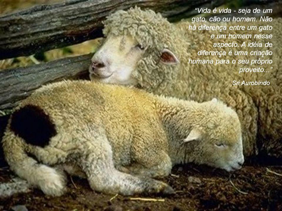 São Francisco de Assis Todas as coisas da criação são filhos do Pai e irmãos do homem. Deus quer que ajudemos aos animais, se necessitam de ajuda. Tod