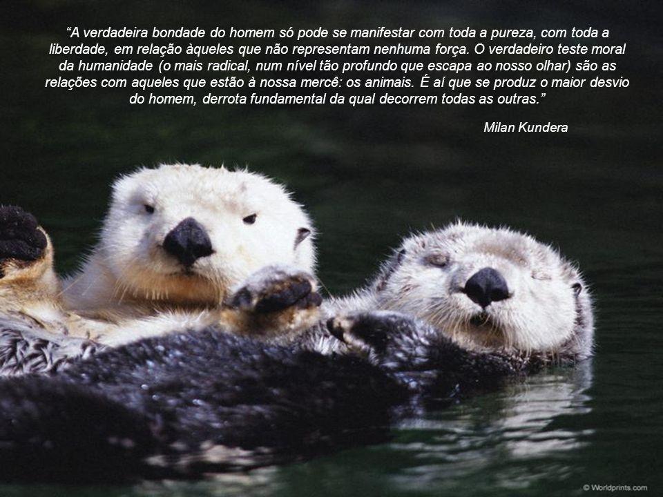Albert Einstein Nossa tarefa deveria ser nos libertarmos... aumentando o nosso círculo de compaixão para envolver todas as criaturas viventes, toda a