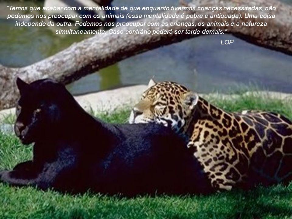 autoria anônima Respeitem os animais.Eles sentem e sofrem como nós.