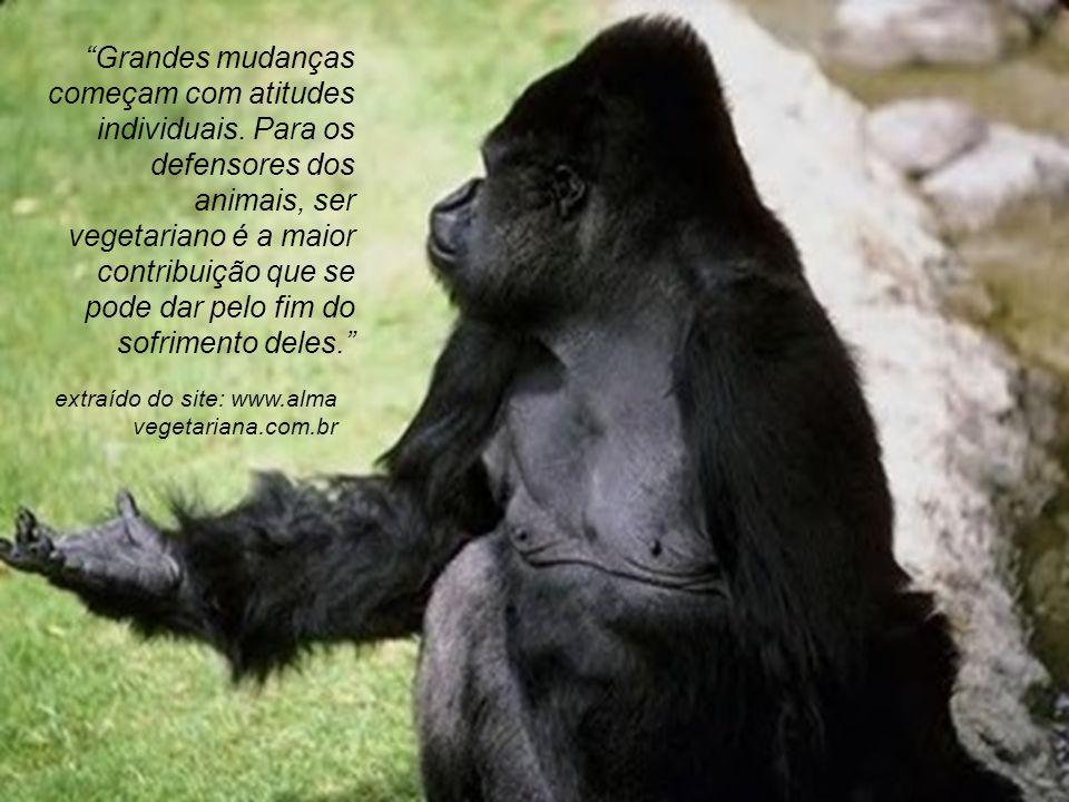 LOP Temos que acabar com a mentalidade de que enquanto tivermos crianças necessitadas, não podemos nos preocupar com os animais (essa mentalidade é pobre e antiquada).