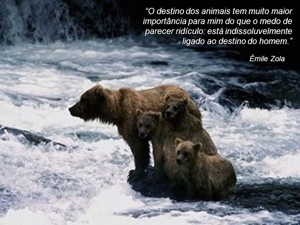 Pitágoras Os animais dividem conosco o privilégio de ter uma alma.