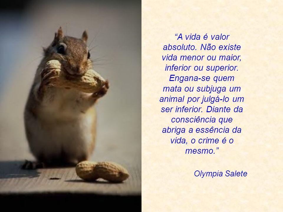 Émile Zola O destino dos animais tem muito maior importância para mim do que o medo de parecer ridículo: está indissoluvelmente ligado ao destino do homem.