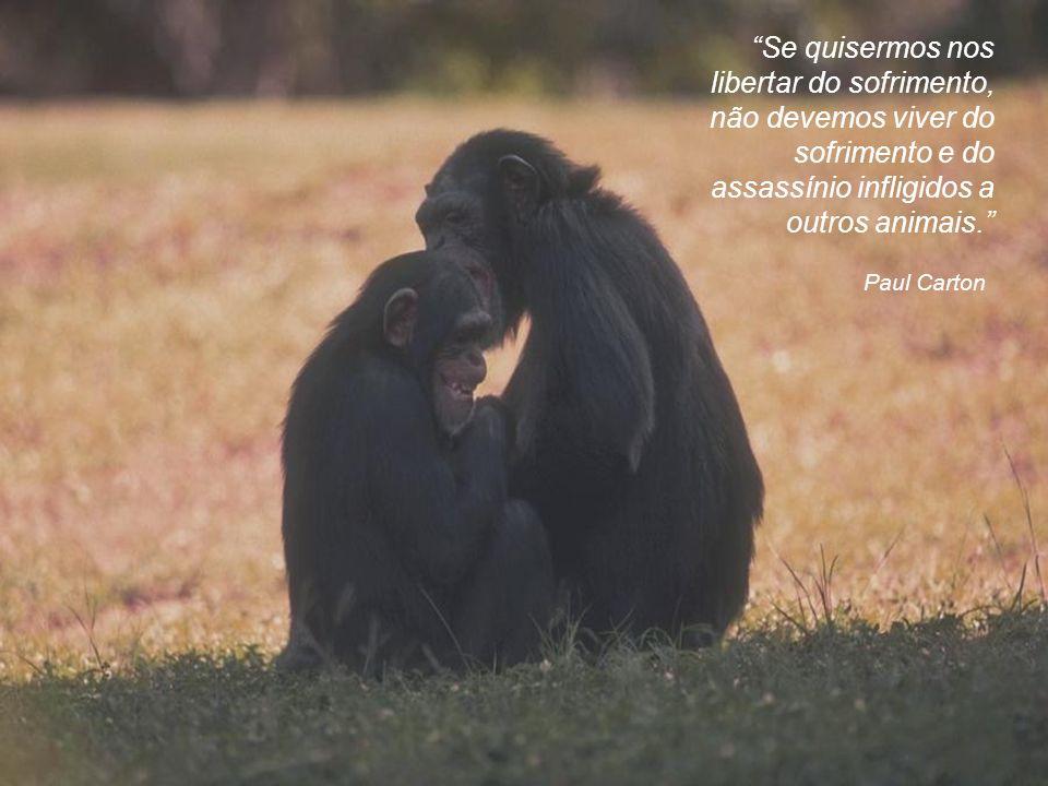 Ali McGraw Eu tenho sentido que a forma pela qual nós tratamos os animais é um bom indicador da falta de compaixão que somos capazes de sentir pela ra