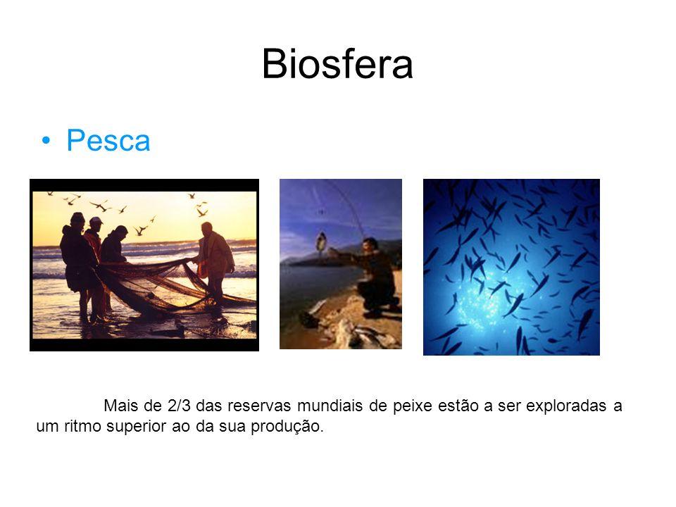 Biosfera O Homem explora a floresta de várias maneiras, sendo esta uma fonte de várias matérias primas, exemplo disso é: - Obtenção de madeira; - Recolha de cortiça; Floresta