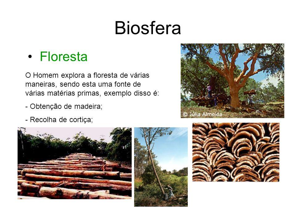 Biosfera Recolha de resina; Recolha de látex. Floresta