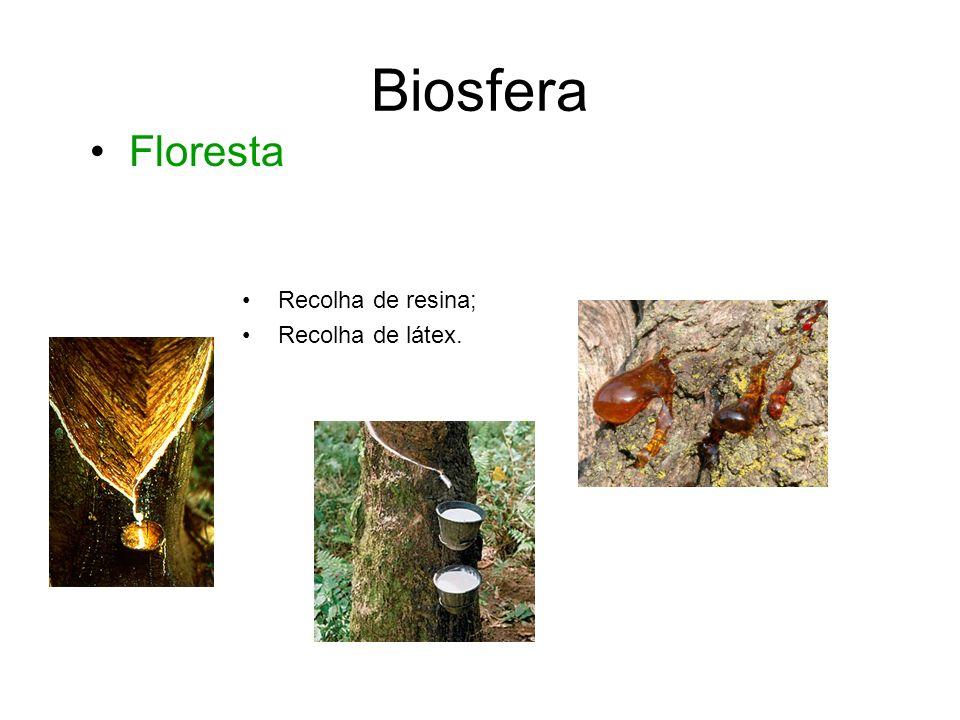 Biosfera Algumas substâncias que a indústria farmacêutica utiliza são retiradas de animais e plantas.