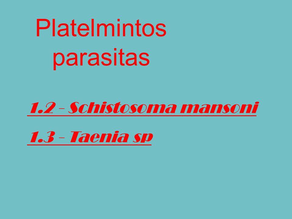 Platelmintos parasitas 1.2 - Schistosoma mansoni 1.3 - Taenia sp